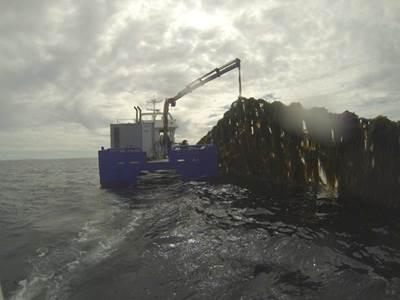 Seaweed harvesting: Photo SES