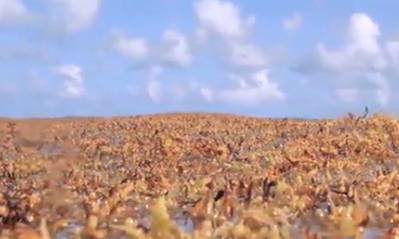 Sargasso Sea image from video courtesy of SSA