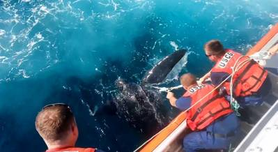 Screenshot of the USCG turtle rescue