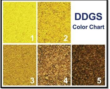 Example of a DDGS color chart from the 'Guide to Distiller's Dried Grains with Solubles (DDGS)' issued by the United States Grains Council. (Source: http://www.nepia.com/our-services/loss-prevention/signals-online/cargo/ddgs-to-china/ddgs-to-china-be-aware-and-be-prepared/)